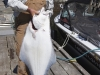 fishers-island-adventures-fishing-halibut