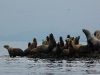 fishers-island-adventures-sea-lions